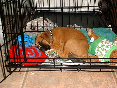 9b2faf1db90c Πώς θα αγαπήσει ο σκύλος μας το crate (μεταλλικό κλουβί)  - Blog - PetShop4u.gr  - Online Petshop