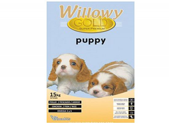 Willowy Willowy Gold puppy